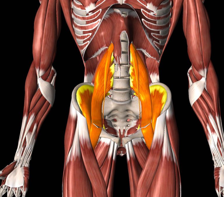 Anatomy of the hip flexors