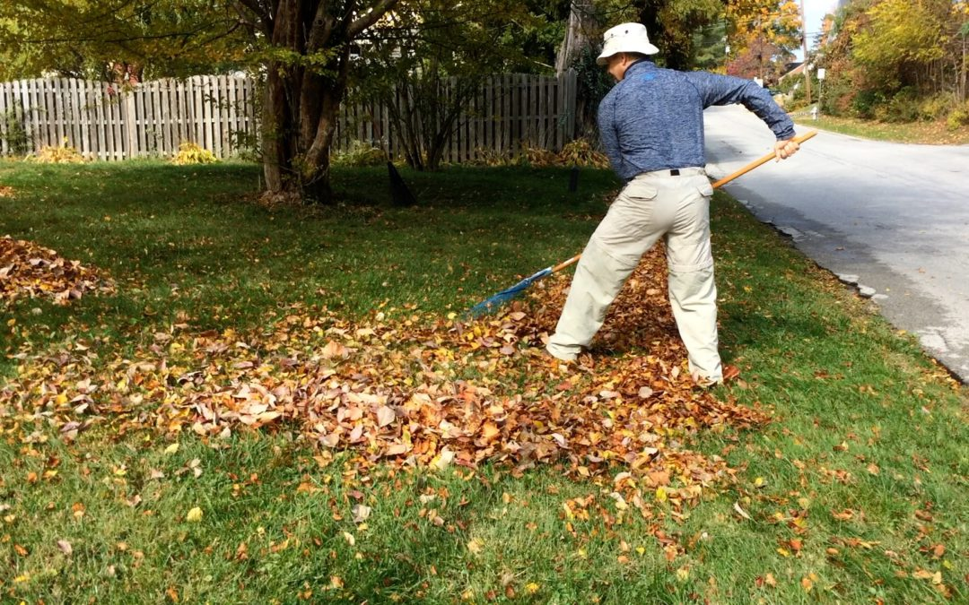 Learn how to Rake Leaves Without Back Pain.