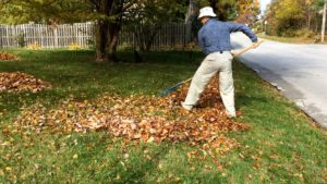 Picture of raking with good body mechanics